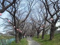 ●桜はまだまだ、寒が戻ったり - 太陽と大地のエクボ3