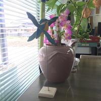 所長小物コレクション -    ■ ■ ■   光畑設計(ミツハタ)  ・  I R Design Office   ■ ■ ■
