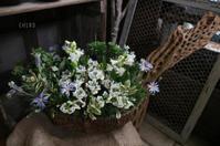 「ありがとう」を伝える、春のカゴの寄せ植え - CHIROのお庭しごと