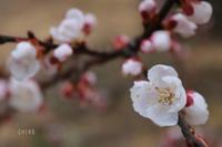 御礼参り - CHIROのお庭しごと