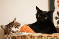 思いやりの気持ち - きょうだい猫と仲良し暮らし