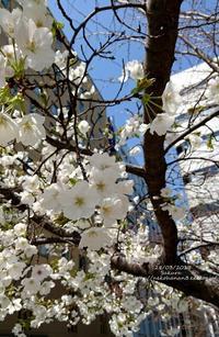 今日は春・・・ - 猫花雑記