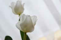 pure(White) - 花の仕事と。。日々の暮らし。。