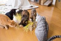 猫草テンション - にゃんず日記