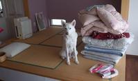 5年ぶり~ - 小太郎の白っぽい世界