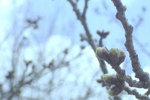 春が見える所に - のんびりボチボチ日記?