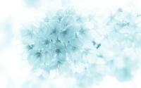 青いさくら - アジな日々