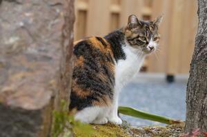 京都御苑・宗像神社の猫たち - たんぶーらんの戯言