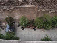ローマの猫の家 イタリア旅行2015(40) - la carte de voyage