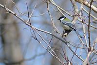 シジュウカラなど - Bird-Watching Journal