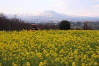 菜の花畑と赤城山 (撮影日:2017/3/28) - toshiさんの気まぐれフォトブログ