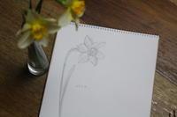 水仙 - 絵画制作日記