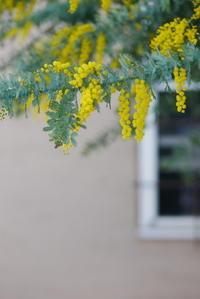 黄色の春 - ぶらり休暇