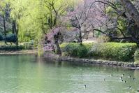 三ッ池公園 - 幸せな写真時間