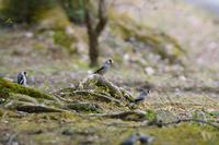 野鳥 - さすらいの写遊人