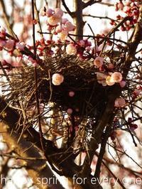 杏の春 - serendipity blog