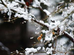 **  春の雪は儚くて  ** - 屋根裏部屋の落書帳(Photo)