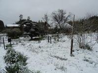 昨日はいつの間にか雨が雪に変わって・・・ - 柴まみママの大多喜便り
