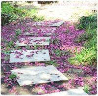 下を見れば - お散歩ねこのお庭