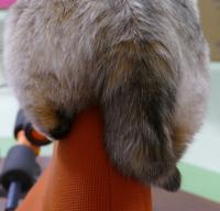 キャンちゃんの尻尾は短いにゃ=^_^= - オール電化生活!カノンとキアと猫ちゃんと愉快な仲間