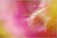 '17 河津桜*Ⅱ - It's only photo