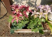 きれいに咲く花 - 【出逢いの花々】