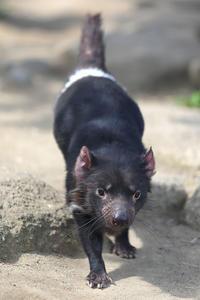 3月29日(水) スパート - ほのぼの動物写真日記