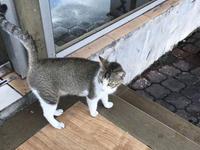 クアラルンプールの猫 その2【奥さんからの写真】 - Lucky★Dip666-Ⅱ