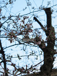 植物的生活784 - Atelier Botanique COCA-Z