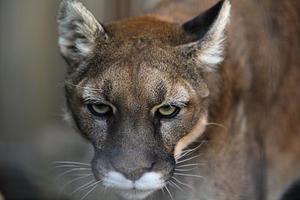 ネコ科獣舎の仲間たち - 動物園放浪記
