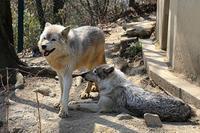 「ゼットン」と「サクラ」 - 動物園放浪記