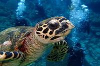 17.3.29 北に南に - 沖縄本島 島んちゅガイドの『ダイビング日誌』