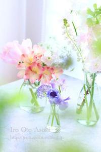 春の光 - 色音あそび