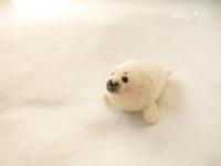 越冬シリーズ~その3 - miz-fc