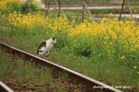 いすみ鉄道と菜の花 - Precious Days ~ふたりで~Ⅱ