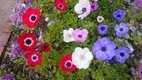 Spring Flower - ヨモギ日記