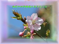 フォト575『 初花や四年経過の生きもうけ 』qx2805 - 老仁のハッピーライフ