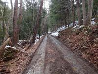 早春を訪ねて - 飛騨山脈の自然