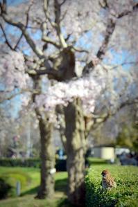 春の目線 - 片眼を閉じて見る世界には・・・。