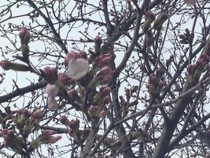 大野のアサリ - 押し花おばさんの気まぐれブログ
