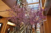 ミッドタウンの桜と、ドラムレッスン - 絵を描きながら