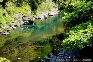 新緑の根尾川 - とことん写真