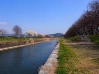 桜並木と隣のごはん(日帰り温泉同好会) - あそびをせんとや ~あそびっこ~
