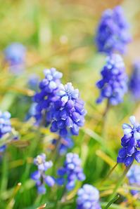 3/28 花が小さな声で - 「あなたに似た花。」