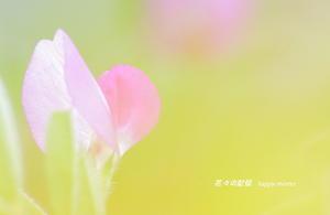 春の野草 - 花々の記憶