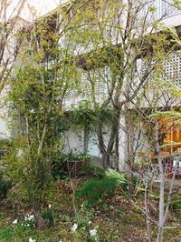keyaki garden 0322 - Healing Garden  ー草庭ー
