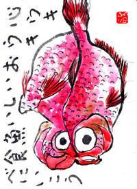 花水木絵手紙教室 魚 旦那様へ ♪♪ - NONKOの絵手紙便り