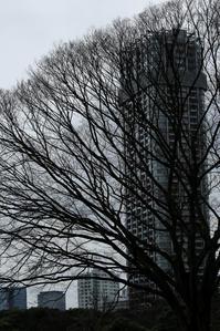 都会の森 - memory