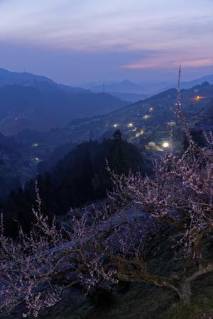 賀名生梅林二回目 - katsuのヘタッピ風景