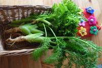 フェンネルと、ワサビ菜。 - Happy world by yoshiko